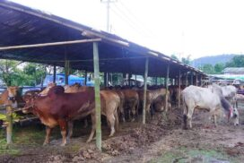 Export of cattle, animal products dives by $35.84 mln this FY