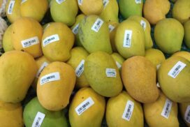 Mango price further drops on low demand