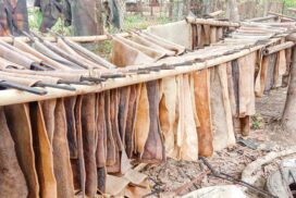 Rubber growers rejoicing as price rises despite lower production