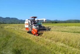Plans are underway to stabilize rice prices to prevent domestic rice shortages