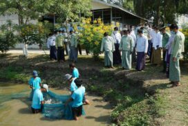 Yezin fishery camp, hub of fish farming, hatching in Nay Pyi Taw Council Area