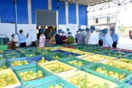 Union Ministers U Tin Htut Oo, Dr Pwint San inspect fruit and vegetable factories in Nay Pyi Taw