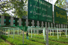Kyaukse Forest Dept sows 50,000 seeds of variety plants