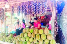 Mangosteen growers in Kawkareik happy with high yield, good price