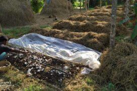 Shiitake mushroom cultivation benefits Phaungpyin residents