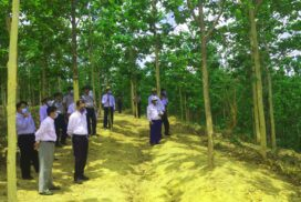Union Minister U Khin Maung Yi inspects forest plantations in Bago Region