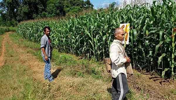 corn 2 sskm