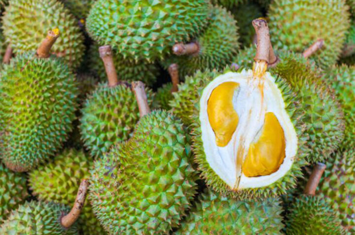 durian NS