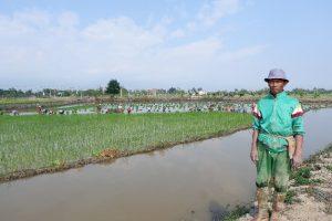 U Sai Sum Tip beside the rice-fish plot during rice transplantation
